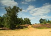 Broxhead Common